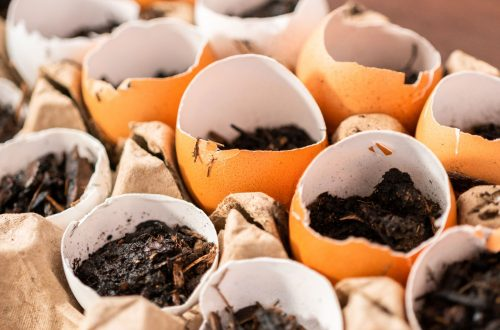 seed-starting-pots