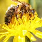 Spring Flowers for Bees