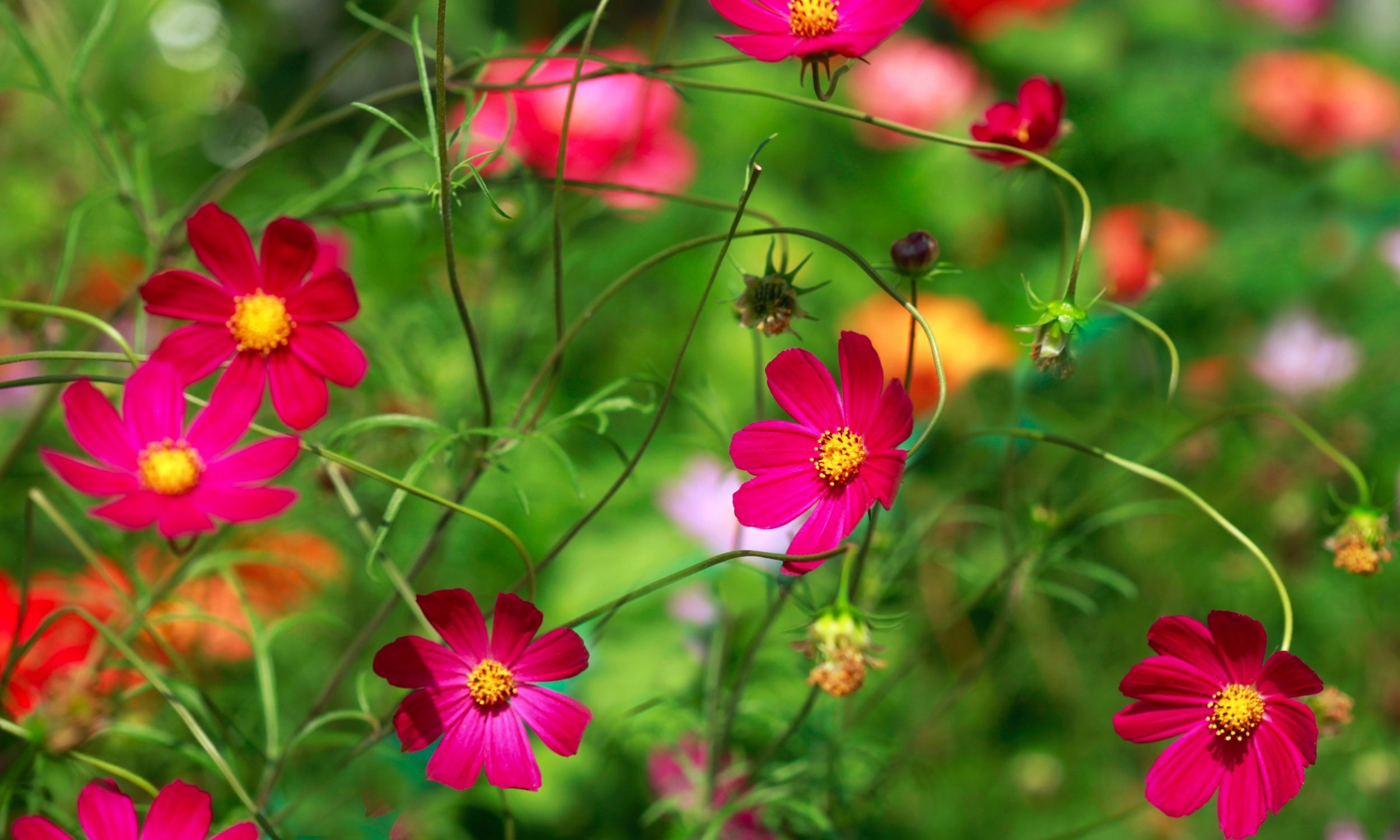 easy cut flowers to grow