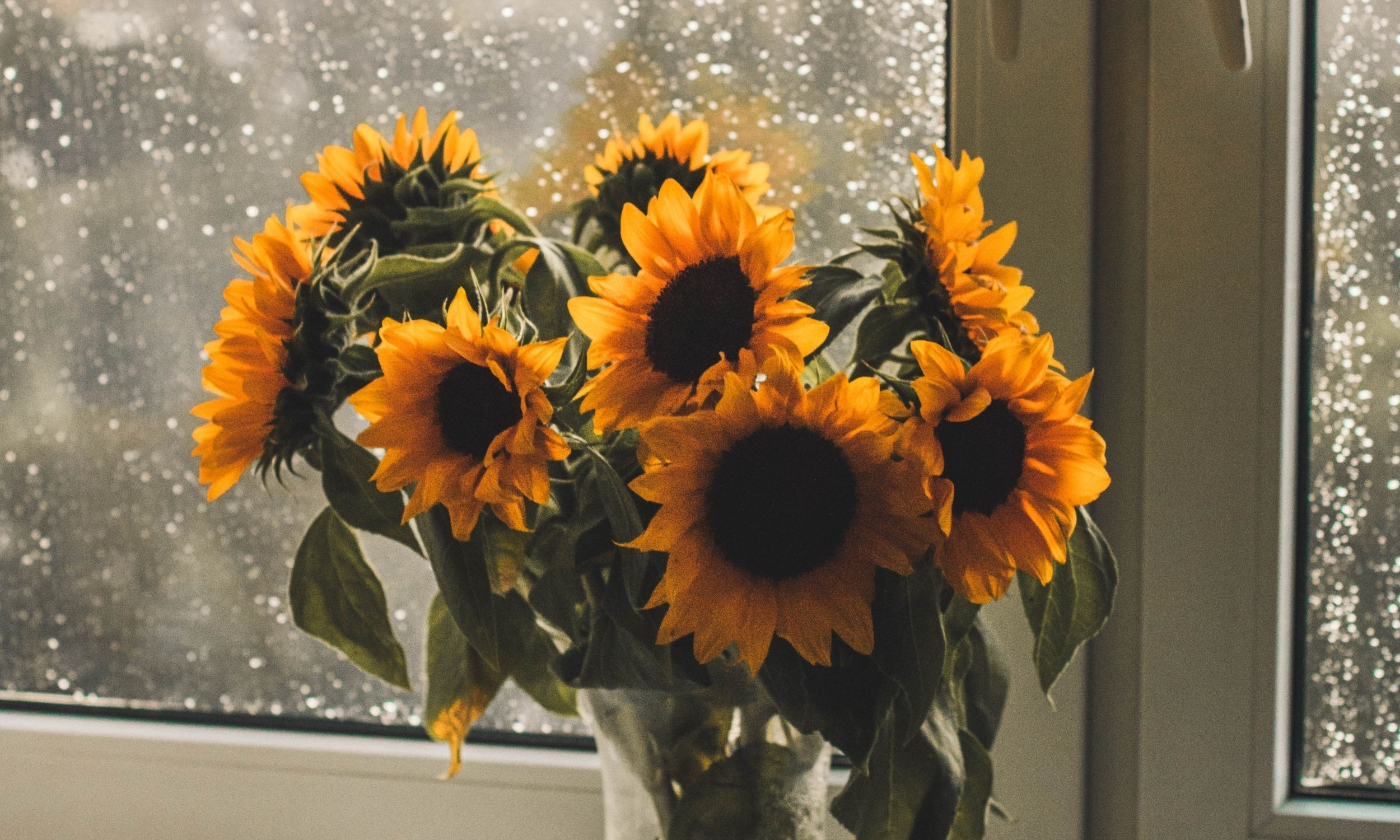 sunflowers in a vase on a window sile