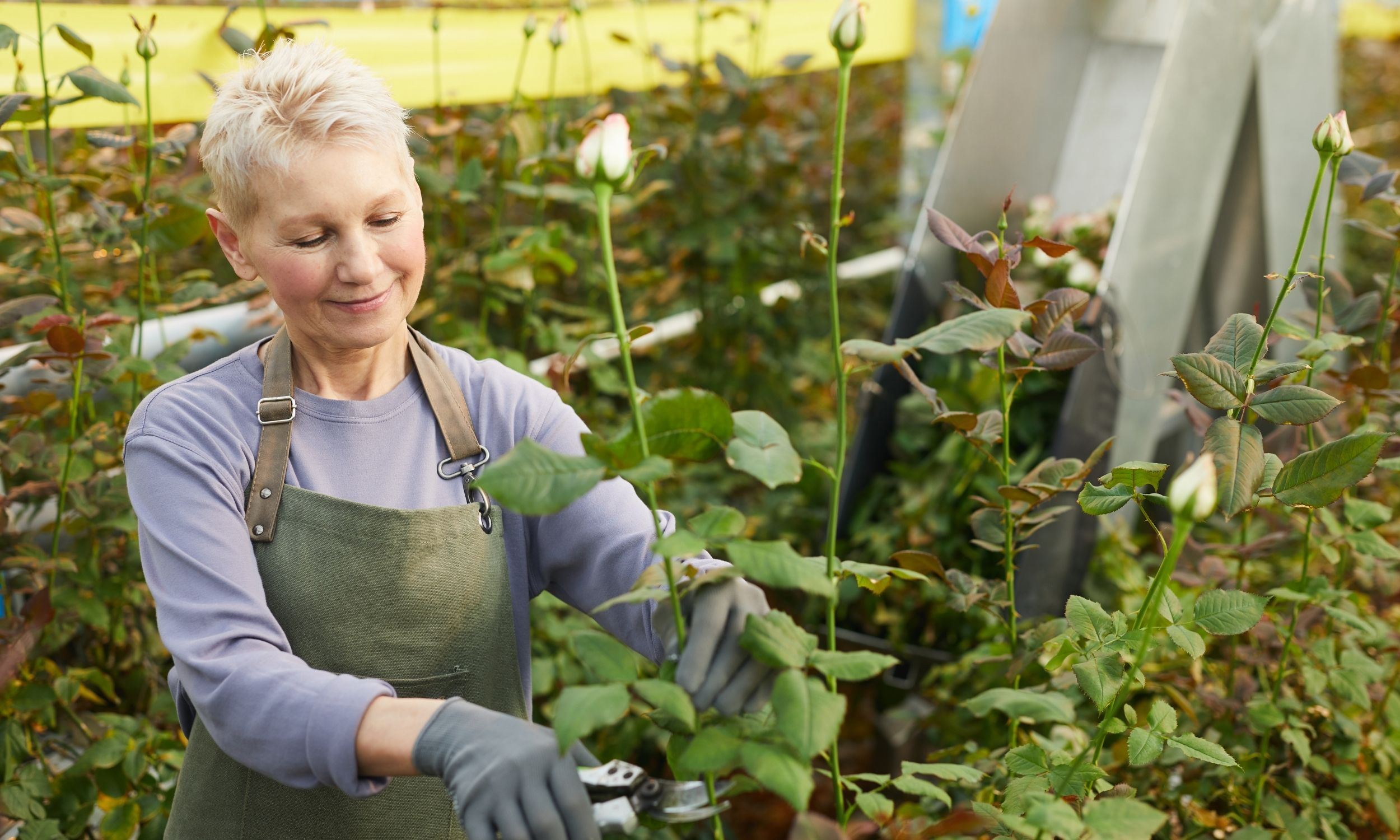 tips for growing cut flowers-