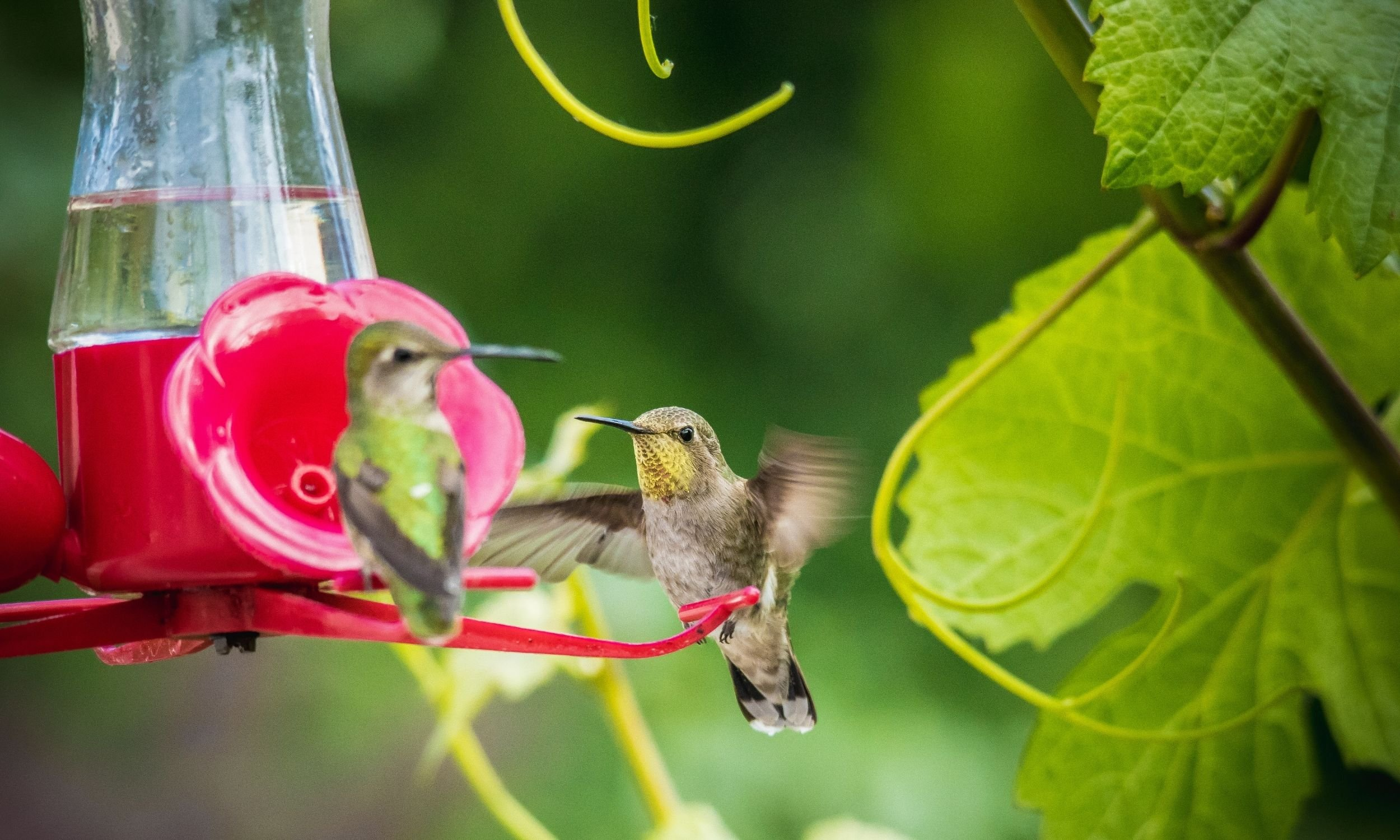 two hummingbirds on a feeder