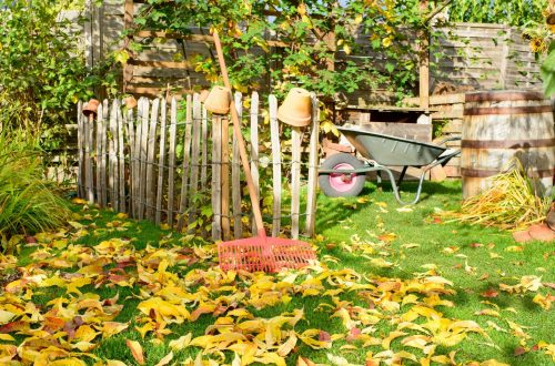 Backyard garden in the fall with leaves and a rake