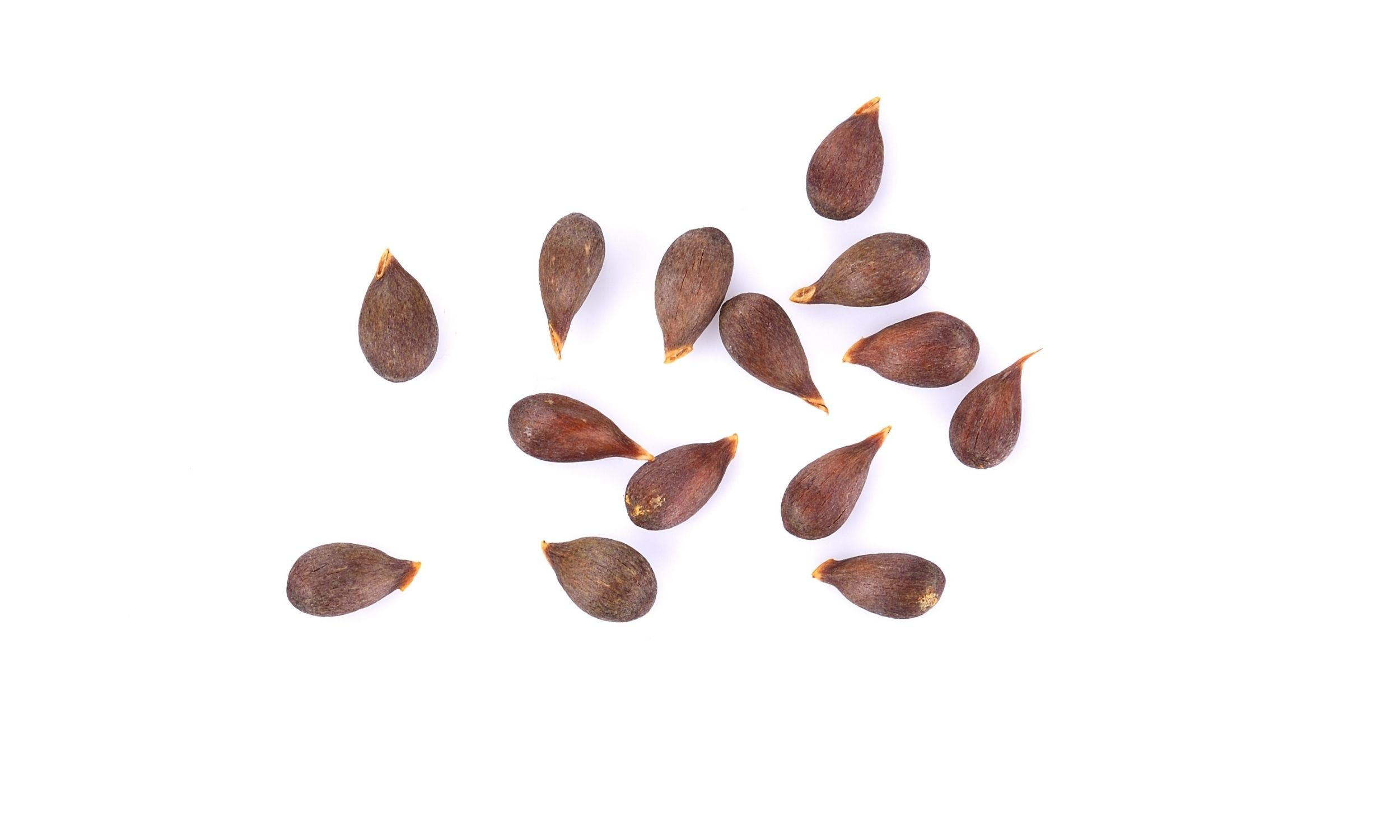 apple seeds on a white background