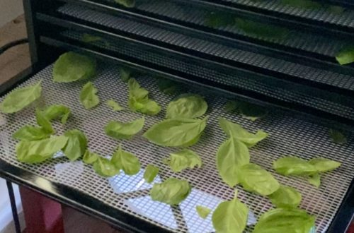 basil leaves on a dehydrating tray